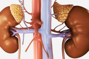 Простой анализ мочи может ускорить диагностику рака надпочечников
